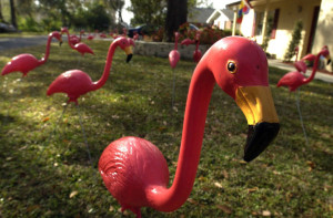 Determined flamingo