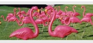 Flamingos flock together.