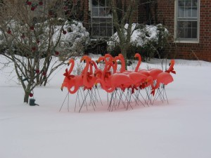 Flamingos on the lawn of the late Jennifer Crispen.